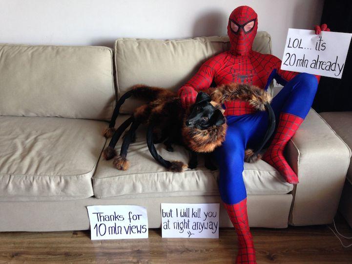 Собака, в костюмчике паука, пугает людей на улицах