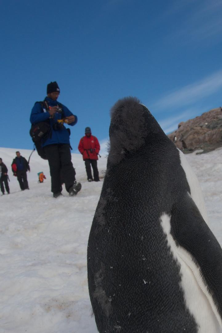 Забавный пингвин