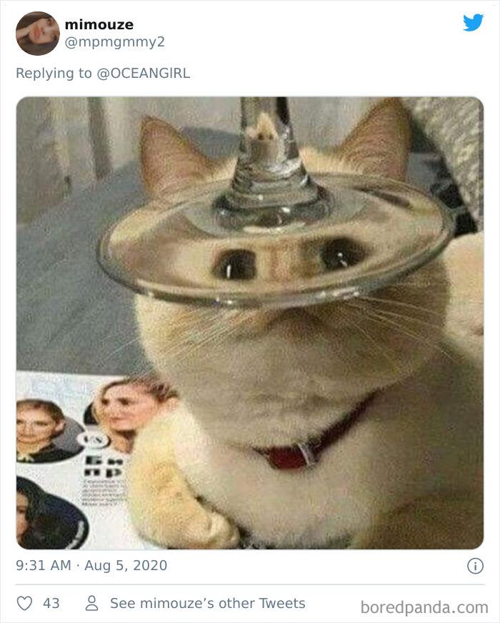 Искаженные через стекло животные