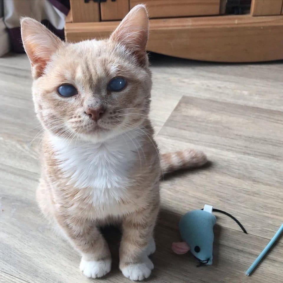 Взрослый кот размером с маленького котёнка