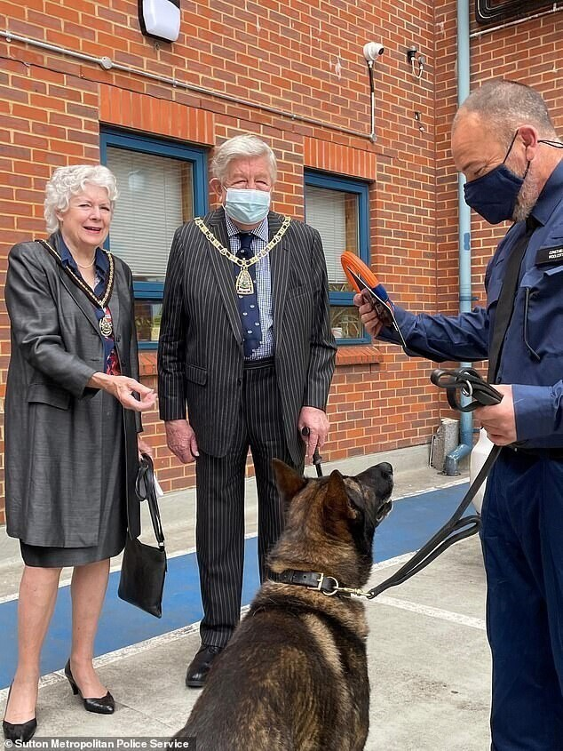 Полицейский пес вернулся на службу после шести ранений