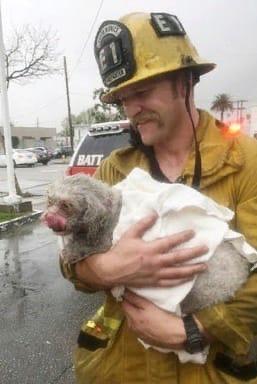 Пожарный спас маленькую собачку с помощью искусственного дыхания