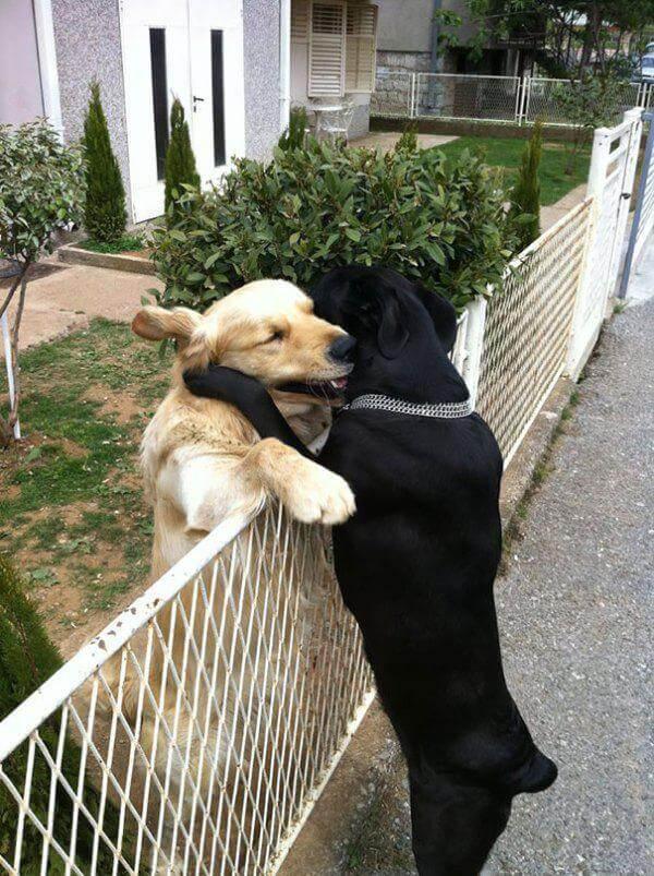 Лучший друг всегда поможет