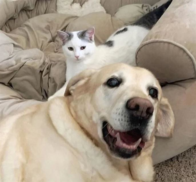 Как кошка с собакой…