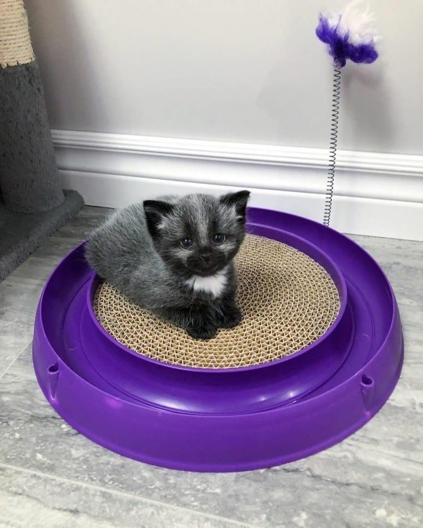 В Канаде прохожие спасли котёнка