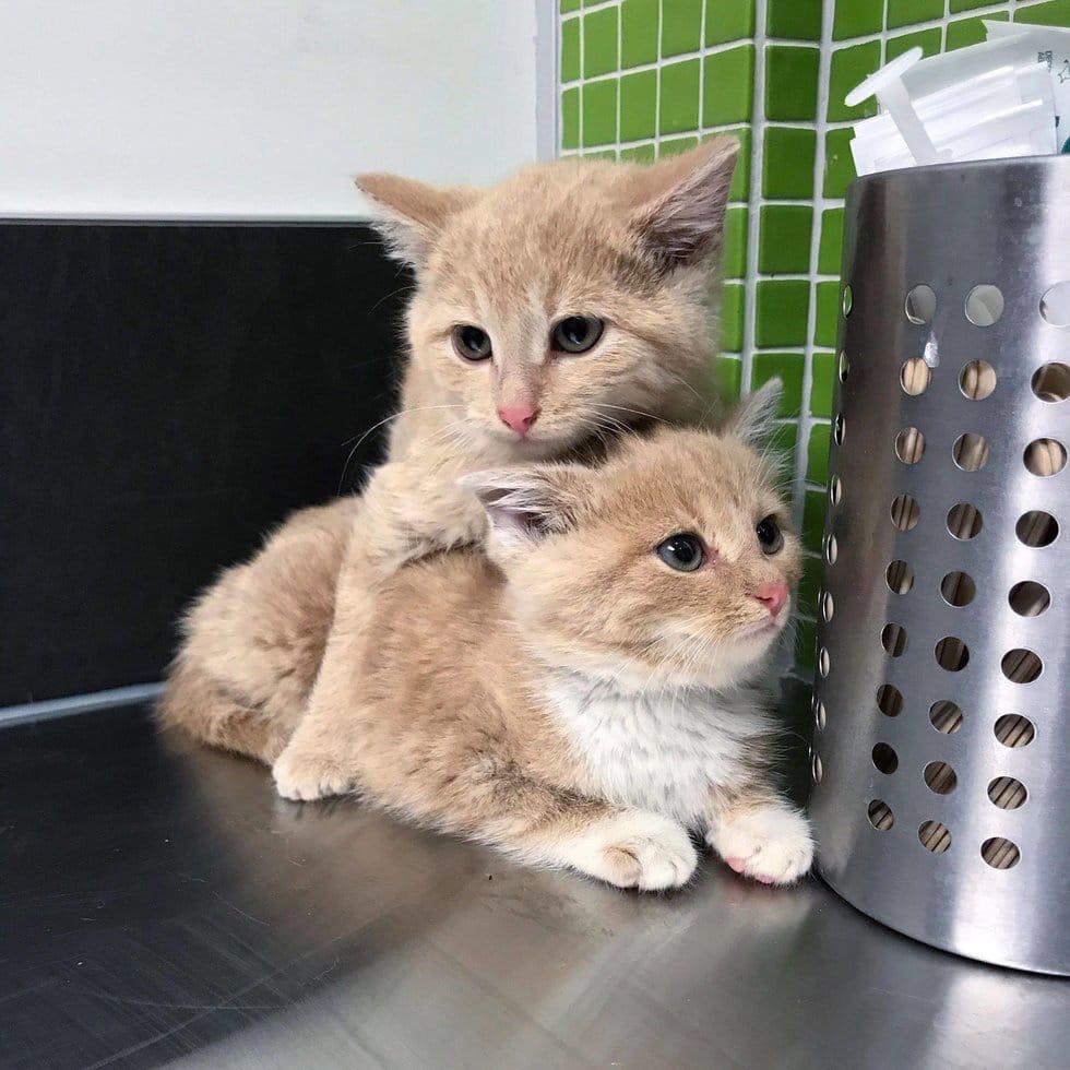 Бездомные котята которые остались верны друг другу даже после спасения с улицы