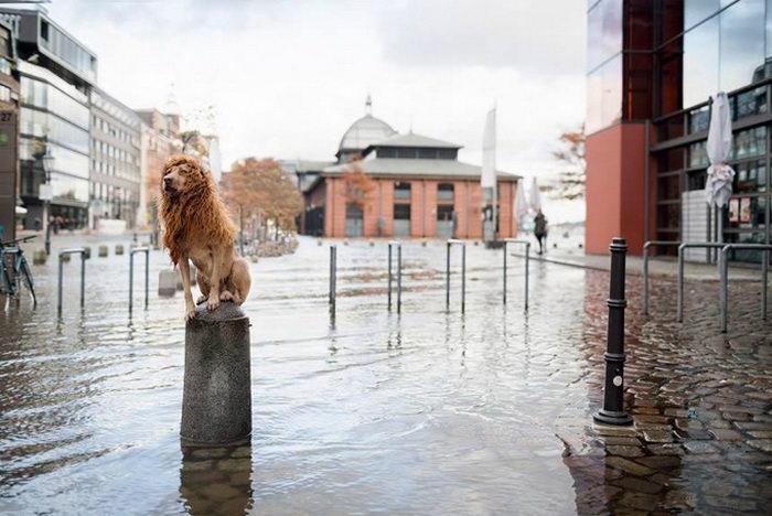 Собаколев в городе