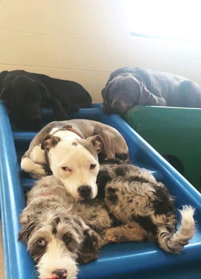 Щенка Эдну обожает весь персонал и собаки из приюта