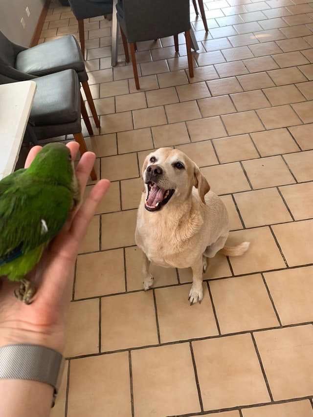 Пёс спас птичку и теперь думает, что он — её старший брат