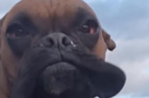 Пёс обожающий ветер