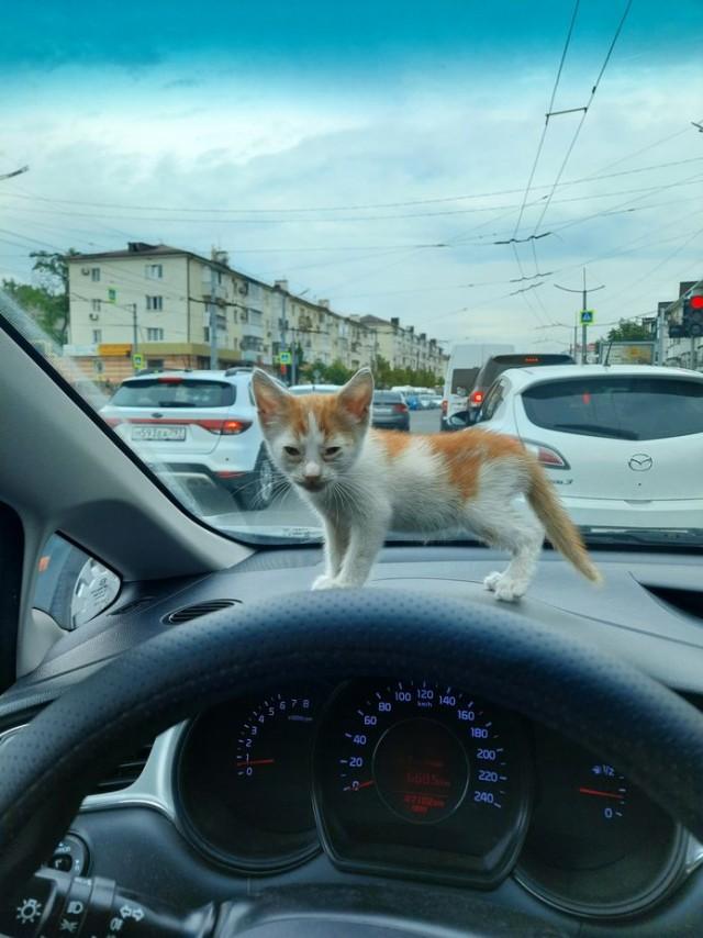Приключения маленького котенка