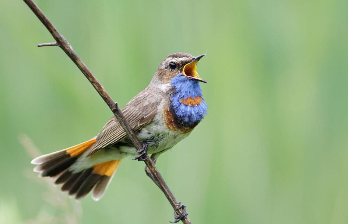 Как выучить птичий язык за 5 шагов