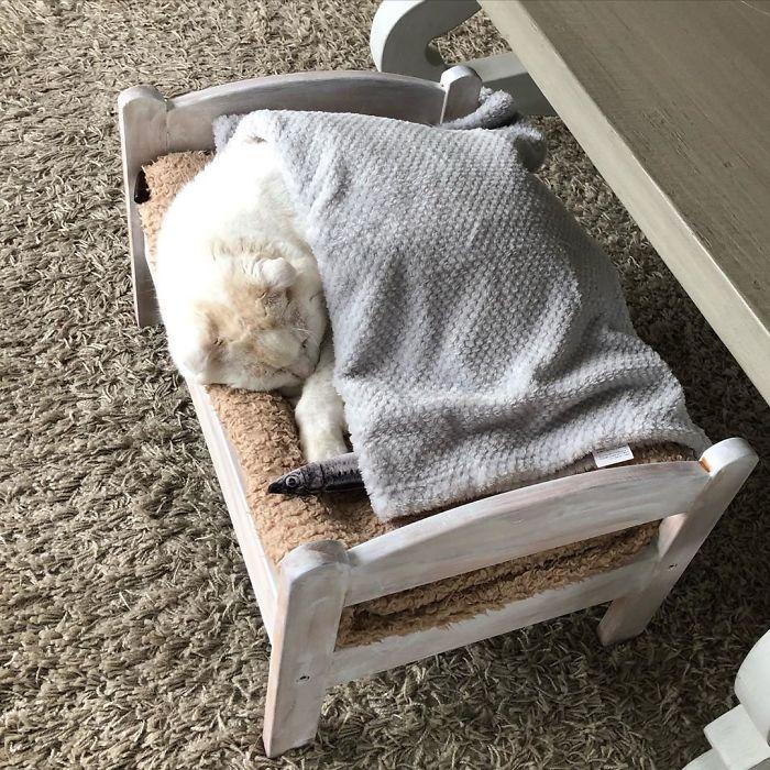 Кроватки IKEA для котиков