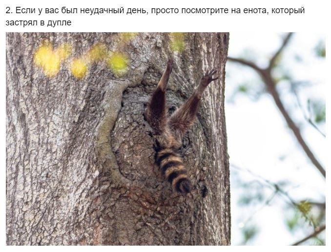Что творят дикие животные