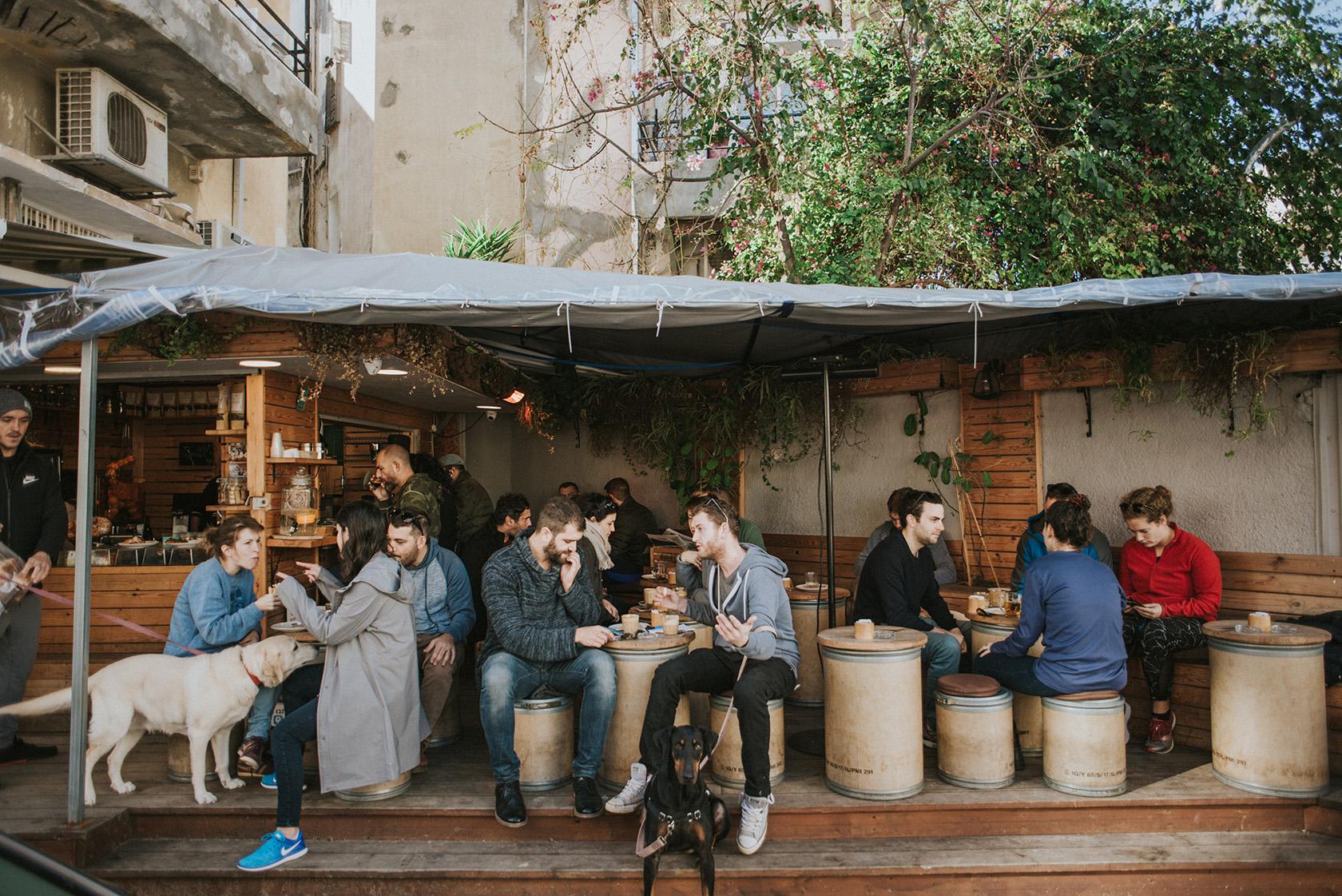В Израиле собак обязали сдать анализы