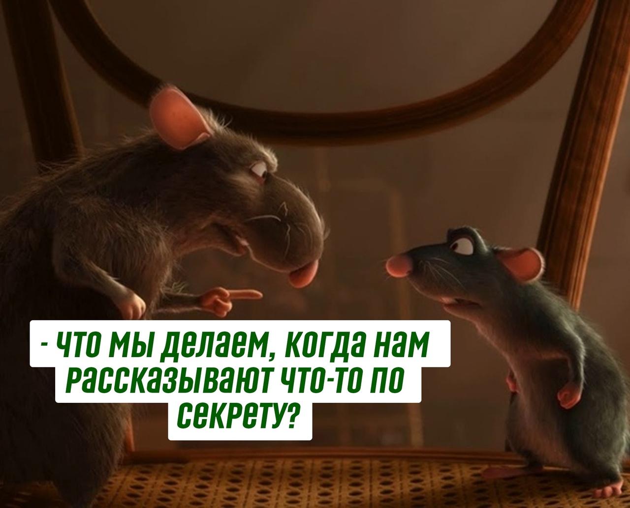 Как легко стать крысой в компании