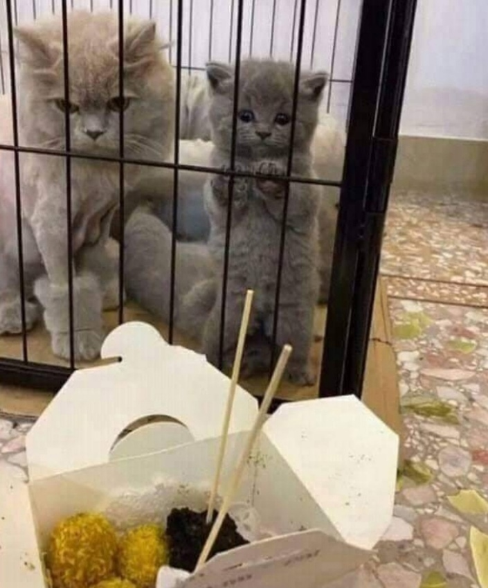 Только посмотрите какими усилиями котенок пытается дотянуться до лакомства