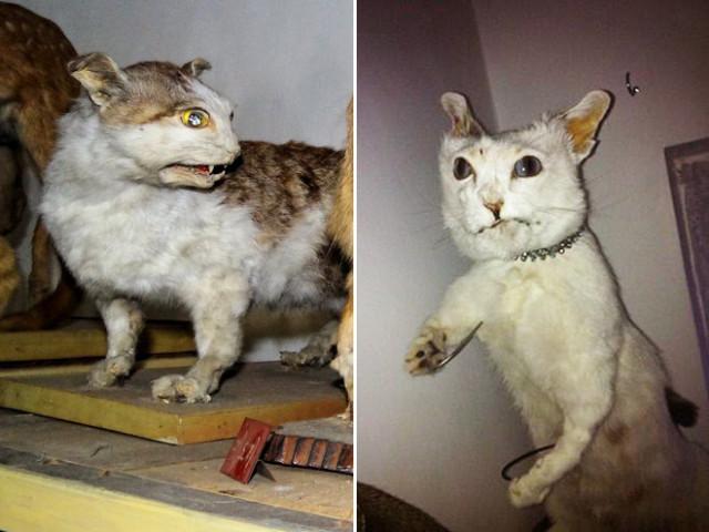 кошки попавшие в руки упоротых таксидермистов